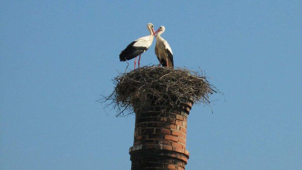 ¿Qué hace que el Algarve sea un destino tan popular para unas vacaciones de observación de aves?